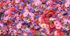 flowers_spring_park_216181